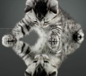 Miroir a bodhisattva for you for Je me regarde dans le miroir