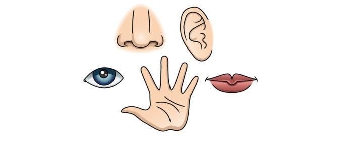 Réflexion sur nos perceptions sensorielles